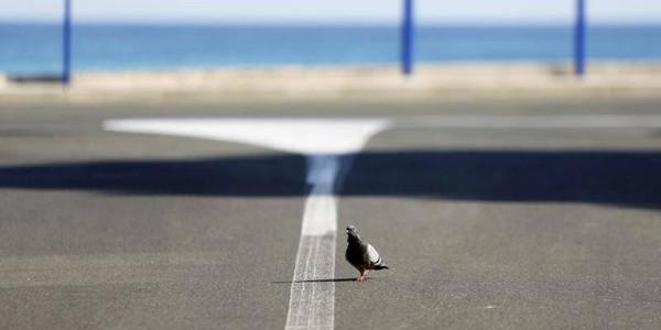 Les pigeons sont-ils porteurs du virus de la Covid-19?