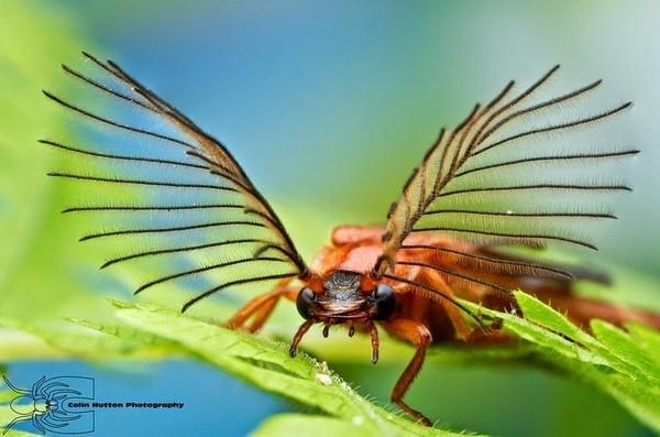 Fascinating antennas of the beetles - NICE PLACE TO VISIT