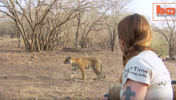 Modeling from tiger rescuing: tale of a spice girl diva - NICE PLACE TO VISIT