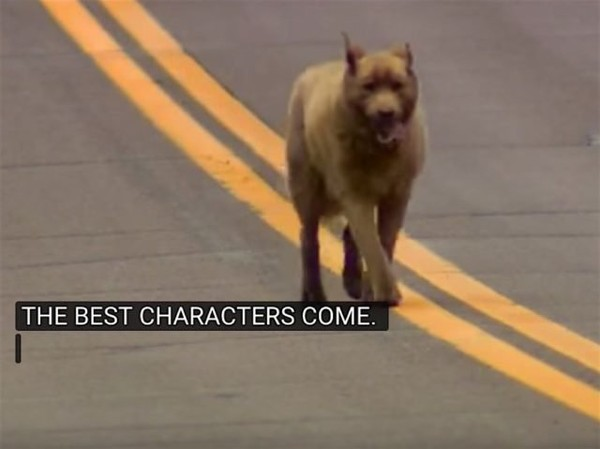 WATCH: Dedicated Dog Walks Four Miles Every Day to See His Friends
