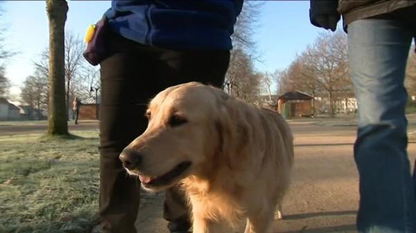 Ces chiens peuvent détecter les crises d'épilepsie avant leur survenue