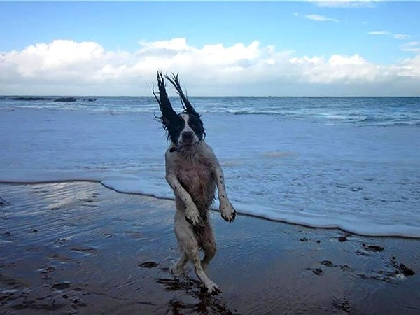Highly unique funny looking dogs pictures - NICE PLACE TO VISIT