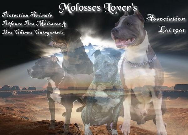 Association Molosses Lover's