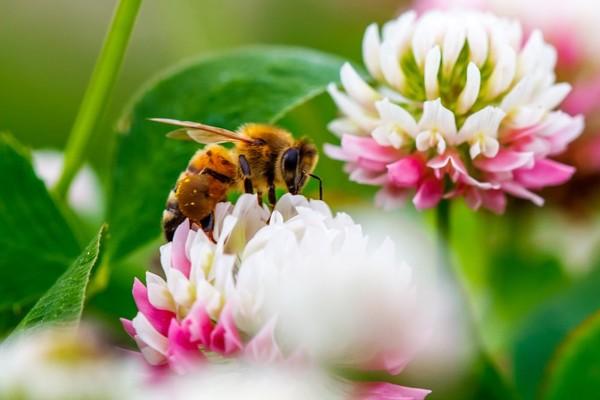 Biosurveillance et abeilles : la norme française prend son envol - AFNOR Normalisation