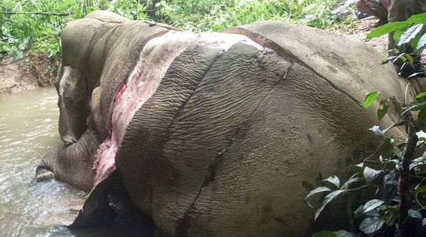 Stop au commerce de peau d'éléphant!