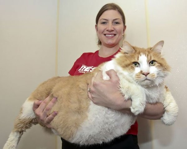 Amazing genuine big house cat breeds - NICE PLACE TO VISIT