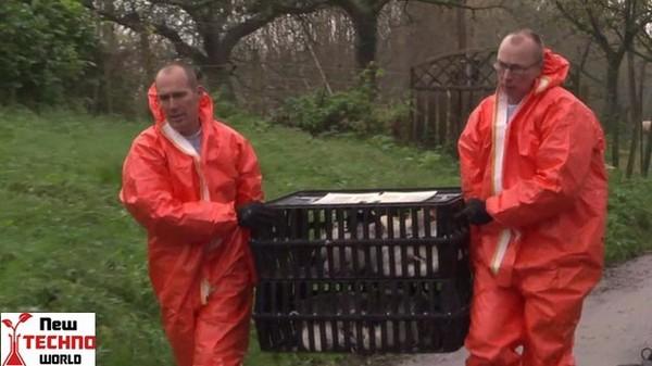 Bird flu EU urgent meeting after Netherlands outbreak | World News