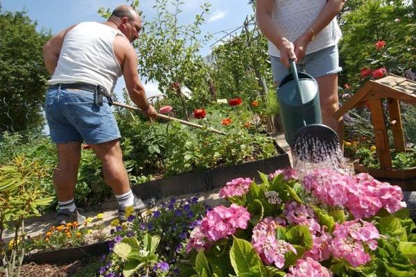 Impôts locaux: la taxe sur les jardins potagers c'est des salades