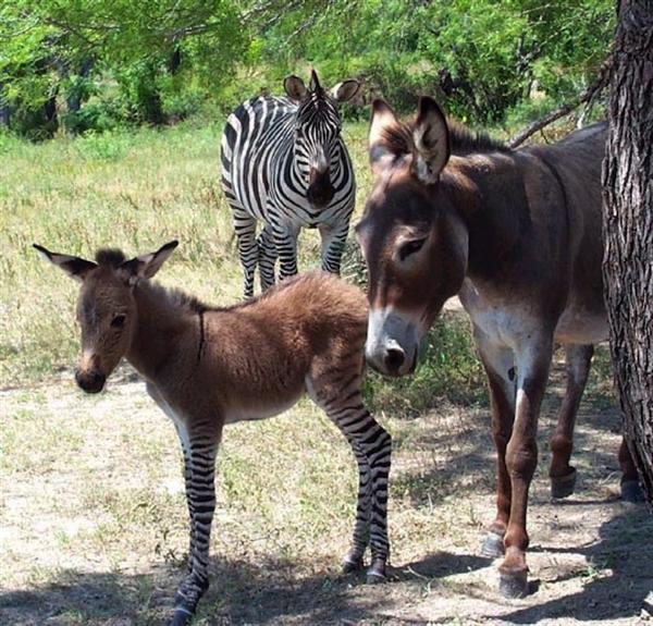 http://www.niceplacevisit.com/amazing-special-italian-donkey/