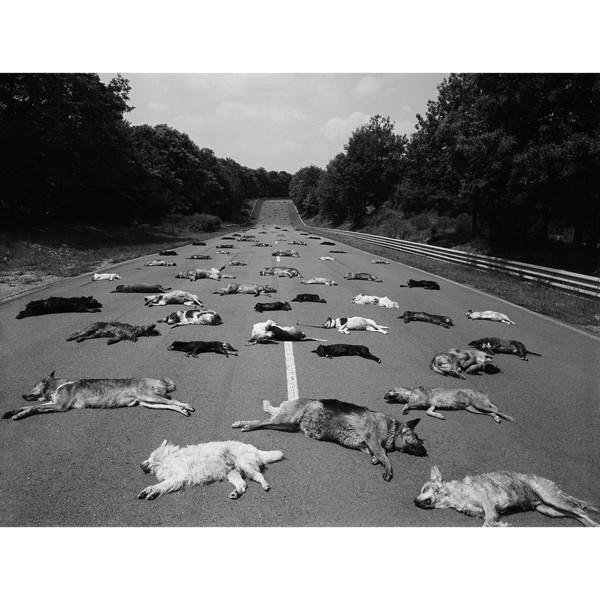 """Paris Match on Instagram: """"L'image est saisissante, c'est la photo de la honte. Parce que tout est vrai, pas de montage numérique: les cadavres de chiens recouvrent…"""""""