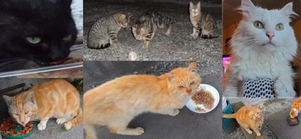 Le pot commun.fr : Pour les chats abandonnés