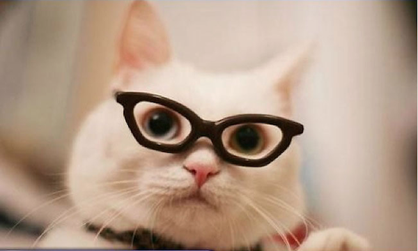 Really lovely cats with glasses on - NICE PLACE TO VISIT