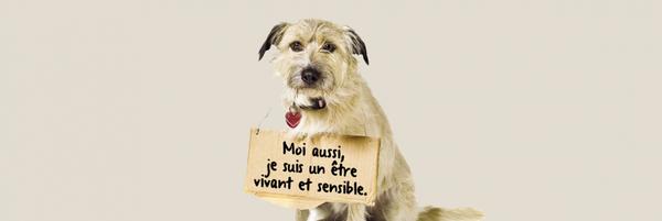Pour un nouveau statut juridique de l'animal - Fondation 30 Millions d'Amis