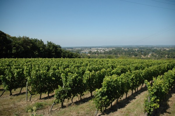 L'actualité du Domaine de la Paleine : Cuisine et Vins de France Septembre 2012 . Numéro spécial Accord Mets Vins