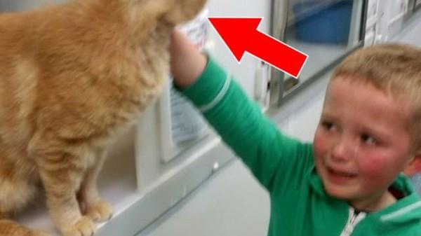 Au refuge, ce jeune garçon fond en larmes quand il découvre la tête de ce chat très particulier