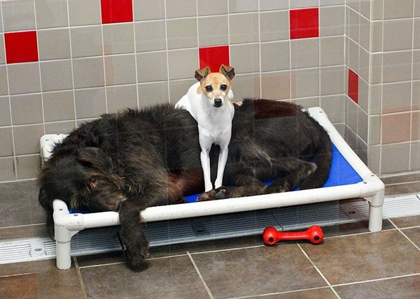 After Losing Their Homes, These Two Dogs Won't Stop Cuddling In The Shelter