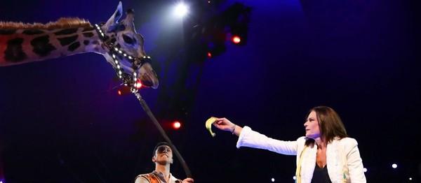 Le coup de gueule de Stéphanie de Monaco pour les animaux du cirque: «Je me battrai jusqu'au bout» - Gala