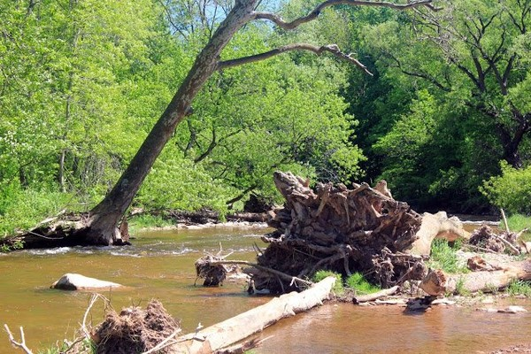 Fallen tree in Stream in Bronte Creek Provincial Park, Ontario, Canada, #10 « Nice Place To Visit