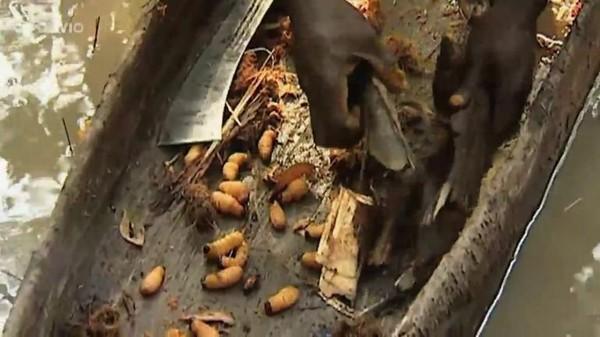 Reflets Sud - La gardienne des termitières - L'appel du charbon (36/41) - 27/11/2017