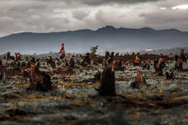 Pourquoi la prochaine grande pandémie pourrait nous venir d'Amazonie
