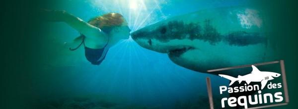 Passiondesrequins - Le massacre des requins