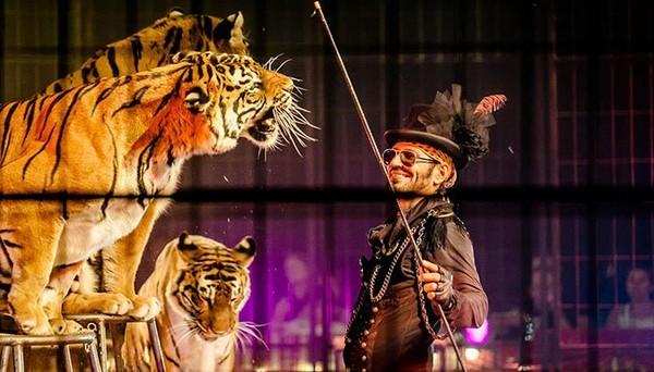 Le cirque Joseph Bouglione arrête les spectacles avec animaux - Fondation 30 Millions d'Amis