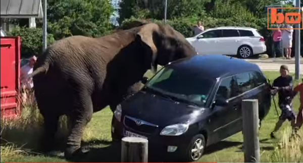 Elephant destroys the streets of Denmark - NICE PLACE TO VISIT