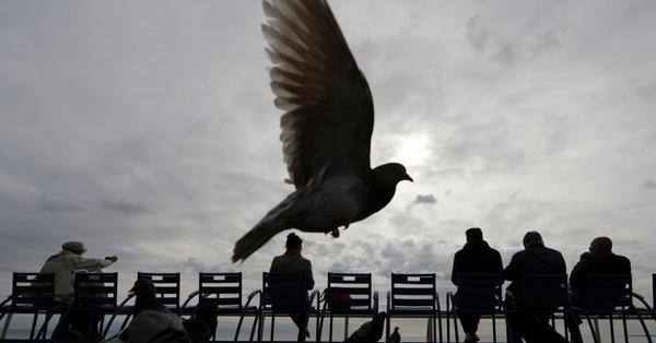 Toujours moins d'hirondelles, de moineaux ou d'alouettes, mais plus de pigeons