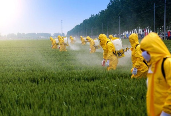 Agriculture industrielle : produire à mort …