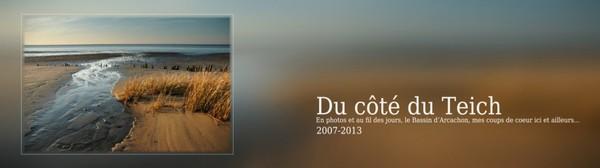 11 | novembre | 2009 | Du côté du Teich... 2007-2013