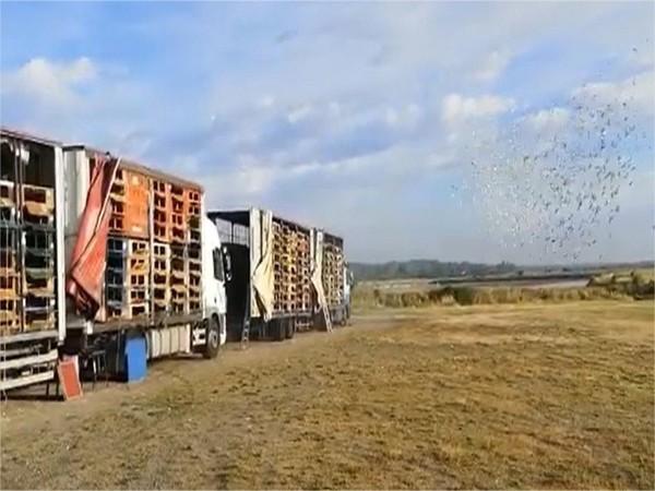 VIDEO : l'envol de 6 000 pigeons, un record aux Sables-d'Olonne