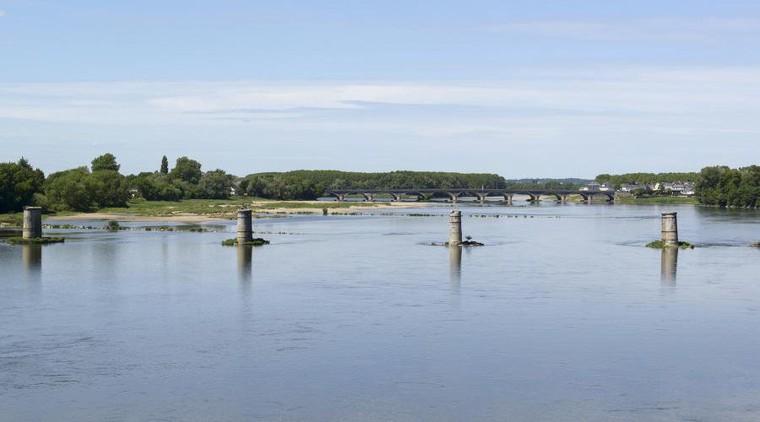 Chiens morts après une baignade. Les algues de la Loire responsables