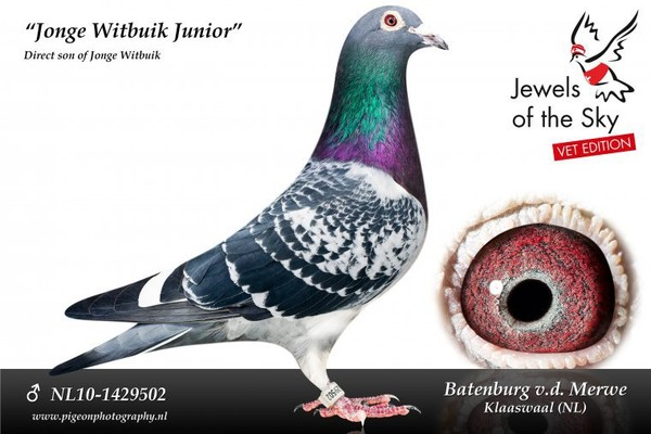 Batenburg-van de Merwe (Klaaswaal, P-B) et la dynastie du Witbuik | PIPA