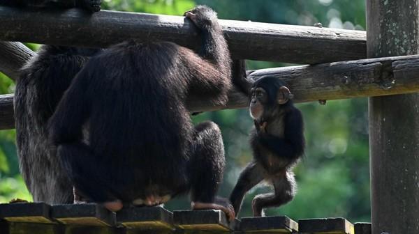 ONU: Jusqu'à 1 million d'espèces pourraient être menacées d'extinction