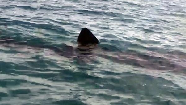 Comores: un crâne humain retrouvé dans le ventre d'un requin - LINFO.re - Océan Indien, Les Comores