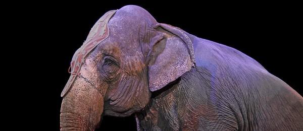 Faites interdire les cirques avec animaux sur le territoire de votre commune !