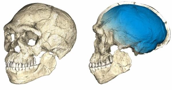 Les premiers humains sont bien plus vieux qu'on ne le pensait (et ne vivaient pas où on le croyait)