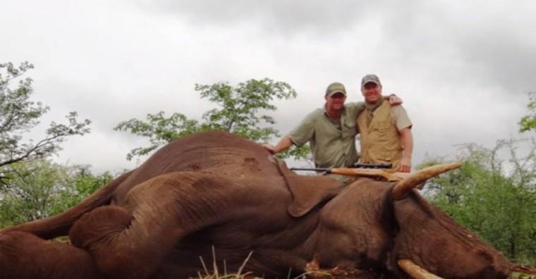 Pourriture, Pauvre m****: Pascal Olmeta est la cible des internautes après avoir abattu un éléphant à bout portant (vidéo)