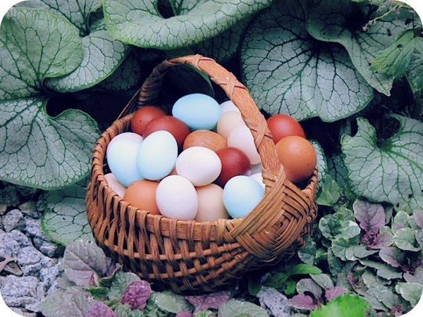 Do not Place All Eggs in the Same Basket. - Daily Poetry and Stories Portal | Easy Branches