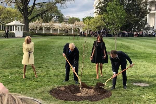 Donald Trump et Emmanuel Macron plantent un chêne dans les jardins de la Maison-Blanche