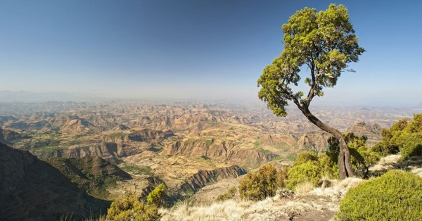 L'Ethiopie va planter 4 milliards d'arbres pour lutter contre la déforestation