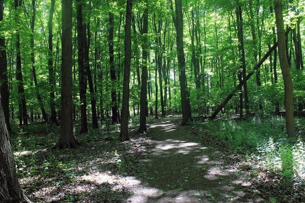 Walking in the Woods at Bronte Creek Provincial Park, Ontario, Canada, #15 « Nice Place To Visit