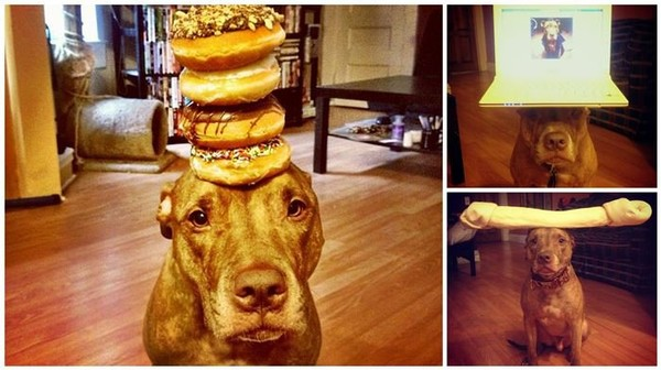 You'll Laugh at What This Loving Dog Owner Makes Her Dog Do!