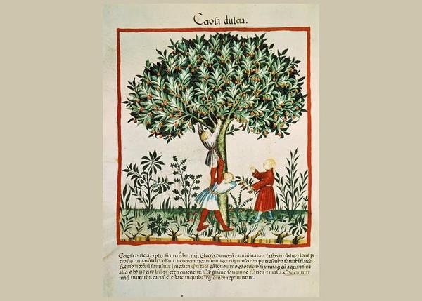 Europe médiévale. Quand les arbres étaient rois au Moyen Âge
