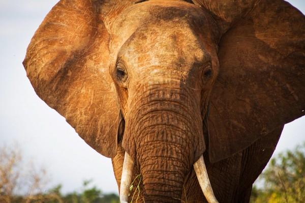 Le trafic d'espèces menacées en 10 chiffres (effrayants)