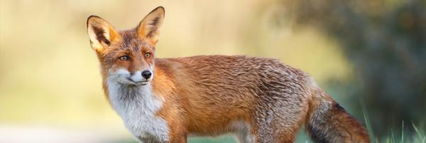 Pour la pénalisation des maltraitances sur animaux sauvages - Fondation 30 Millions d'Amis